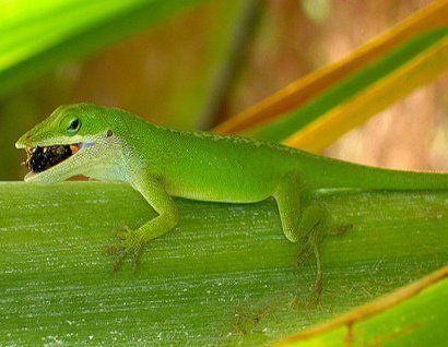 Сложности питания рептилий.