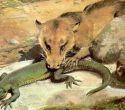 От рептилий к теплокровным, или активная чувственность решает всё.