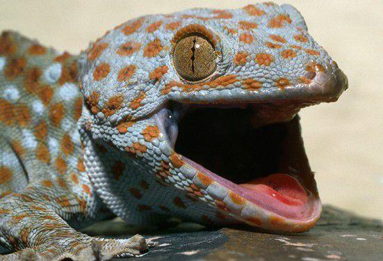Эволюция пришла и рептилий унесла…