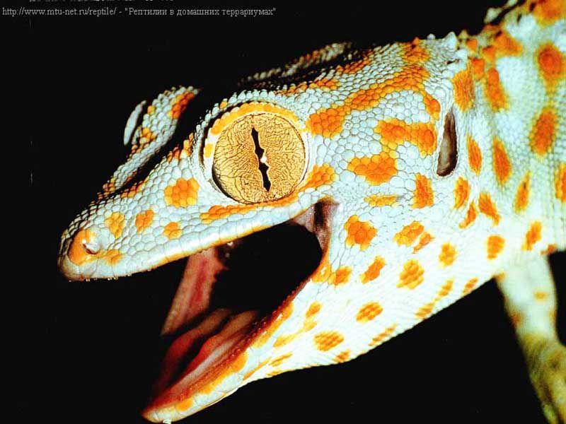 Типы Рептилий