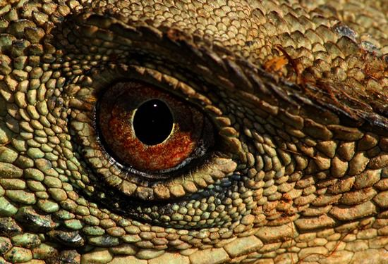 Фантазии на тему разнообразия рептилий.