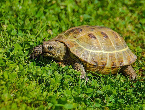 Назначение черепахи.