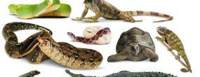 Насколько действительно холоднокровны рептилии?