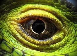 Миром правят рептилии?